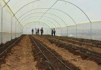 greenhouse polythene