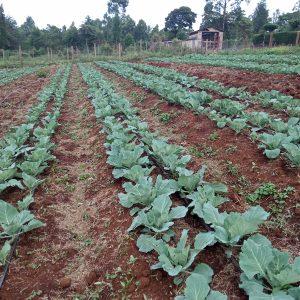 ¼ acre drip irrigation kit
